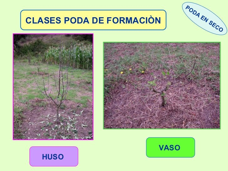 CLASES PODA DE FORMACIÒN HUSO   VASO   PODA EN SECO
