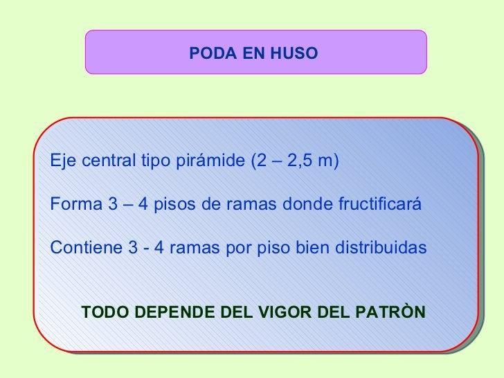 <ul><ul><ul><ul><li>Eje central tipo pirámide (2 – 2,5 m) </li></ul></ul></ul></ul><ul><ul><ul><ul><li>Forma 3 – 4 pisos d...