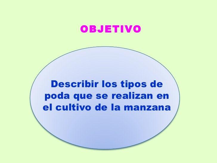 Describir los tipos de poda que se realizan en el cultivo de la manzana OBJETIVO