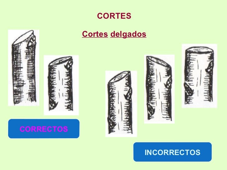 CORTES Cortes   delgados CORRECTOS INCORRECTOS