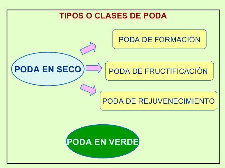 TIPOS O CLASES DE PODA PODA DE FORMACIÒN PODA DE FRUCTIFICACIÒN  PODA DE REJUVENECIMIENTO PODA EN SECO PODA EN VERDE