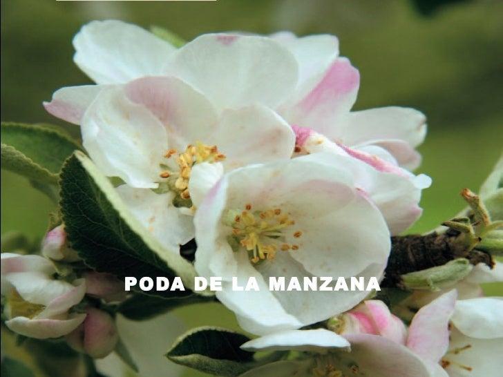 PODA DE LA MANZANA