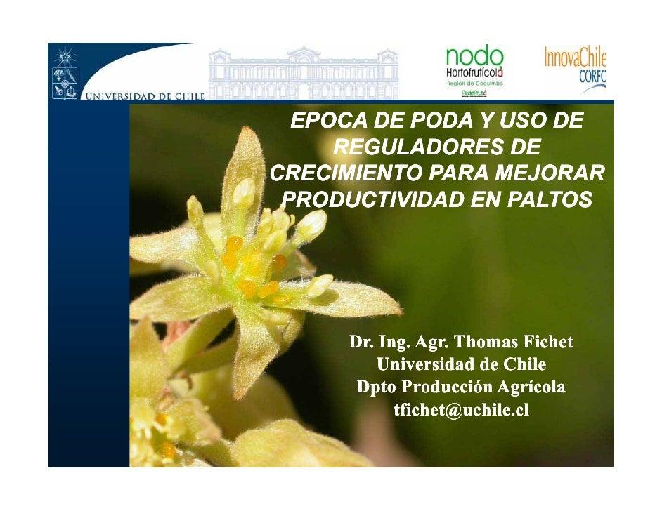 EPOCA DE PODA Y USO DE     REGULADORES DECRECIMIENTO PARA MEJORAR PRODUCTIVIDAD EN PALTOS     Dr. Ing. Agr. Thomas Fichet ...