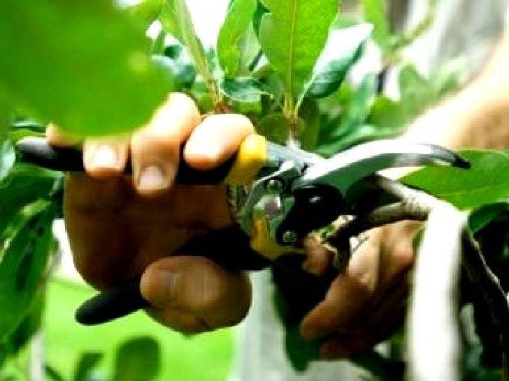 Podas      Quando eu era criança,encontrei, um dia, um jardineiro,  com uma tesoura enorme na              mão. Fiquei rev...