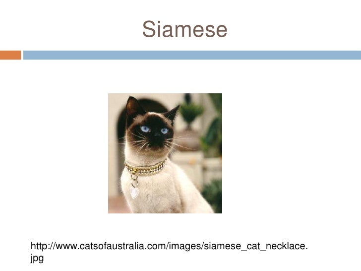 Siamese<br />http://www.catsofaustralia.com/images/siamese_cat_necklace.jpg<br />