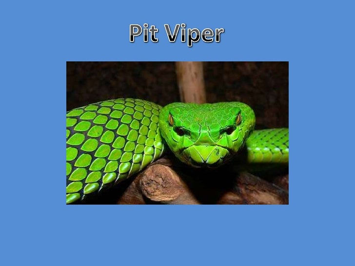 Pit Viper<br />