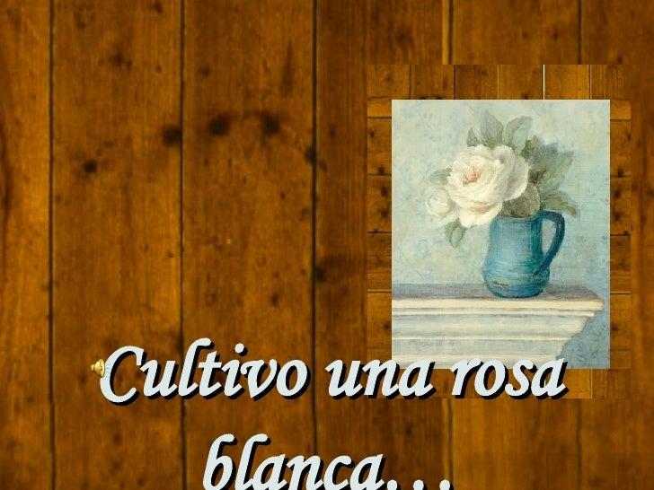 cultivo una rosa blanca pdf