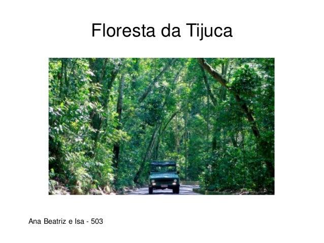 Floresta da Tijuca Ana Beatriz e Isa - 503