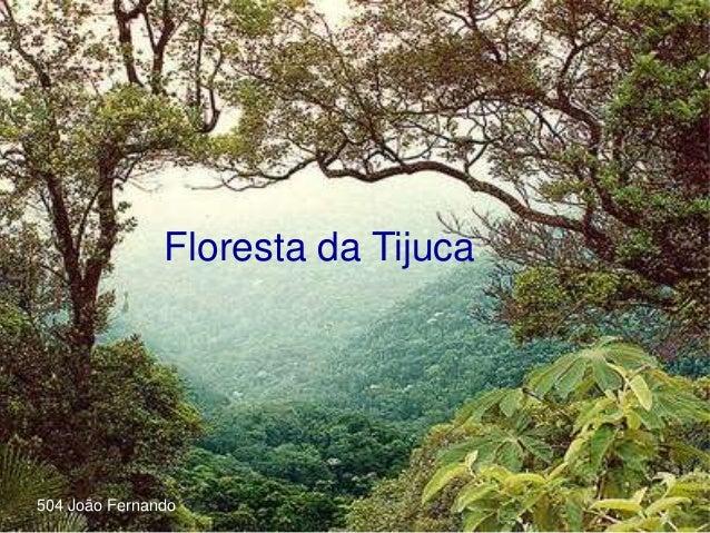 Floresta da Tijuca 504 João Fernando