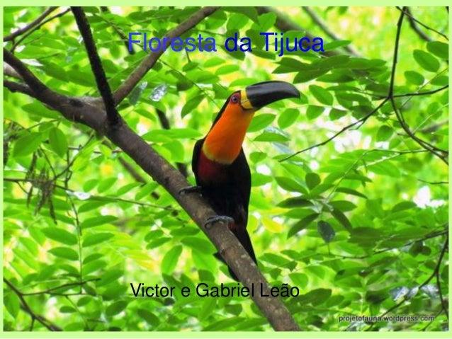 Floresta da Tijuca Victor e Gabriel Leão