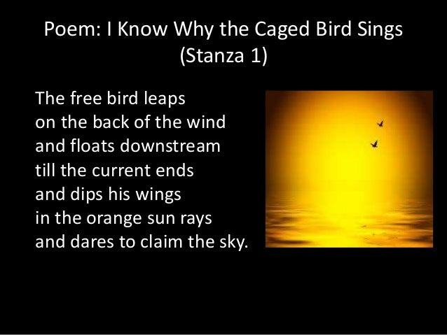 conclusion of i know why the caged bird sings Caged bird by maya angelou was first published in her book, shaker, why don't you sing in 1983 the poem is a metaphor illustrating the differences between african-americans and whites during the civil rights era the author, a black who grew up in the south during this era, is expressing her feelings at the discrimination she faced during.