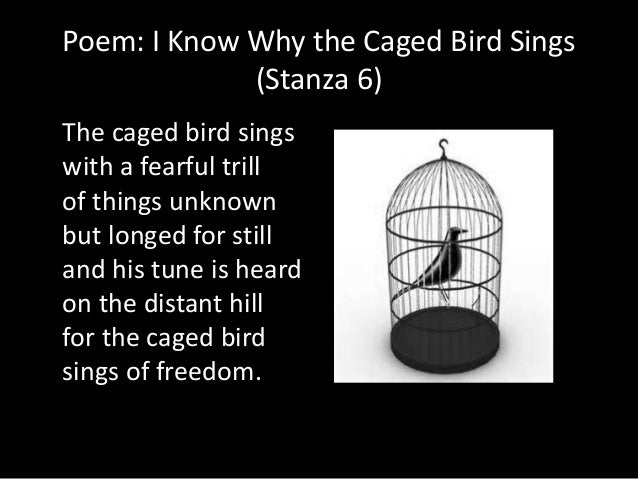 essay on i know why the caged bird sings poem