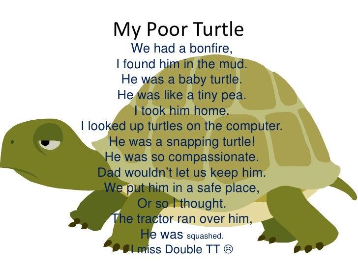 Turtles Poems 6
