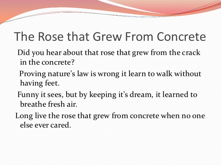 "poetic analysis rose that grew from The background ""the rose that grew from concrete"" is a poem composed by tupac shakur it also exists as a poetic album released in 2000 the composer, tupac was a famous american actor and rapper who is popularly referred to as ""2pac."