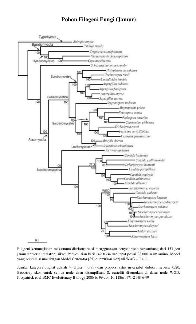 Pohon filogeni fungi ccuart Choice Image