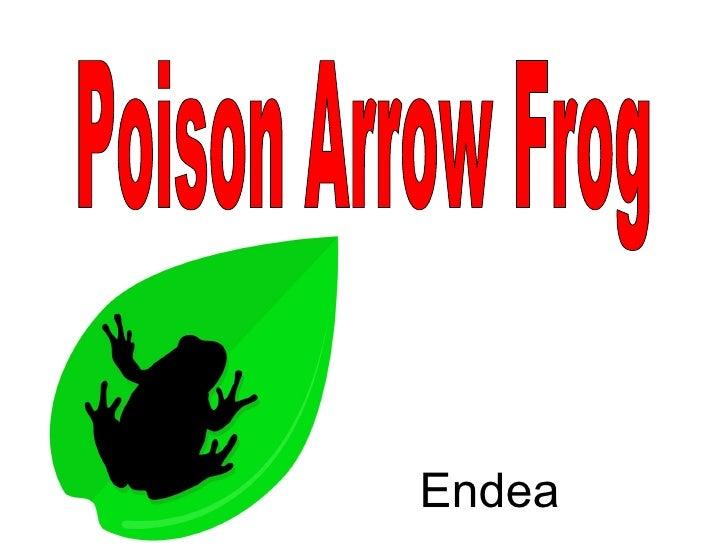 Poison Arrow Frog Endea