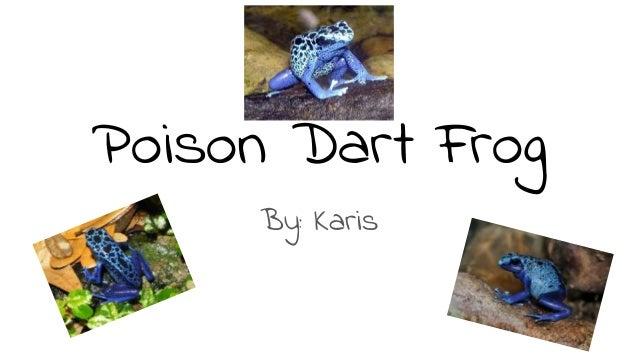 Poison Dart Frog By: Karis