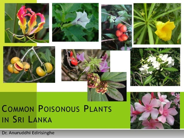 medicinal plants in sri lanka pdf
