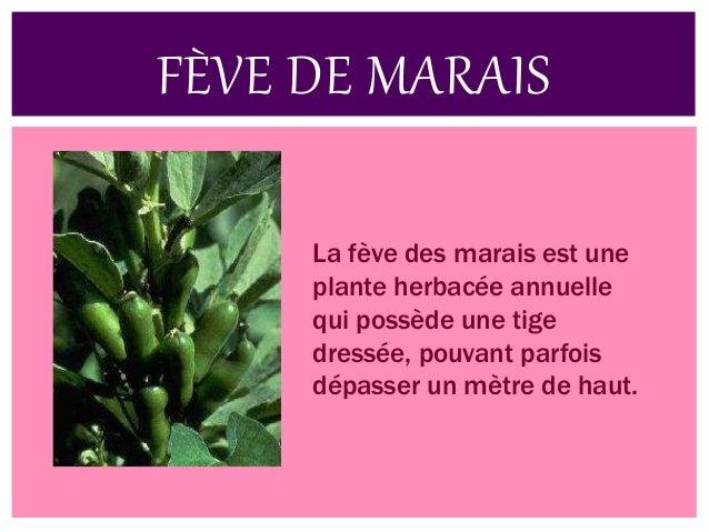La pomme de terre de l'île de Ré est une appellation d'origine contrôlée (AOC) qui s'applique à une production de pommes d...