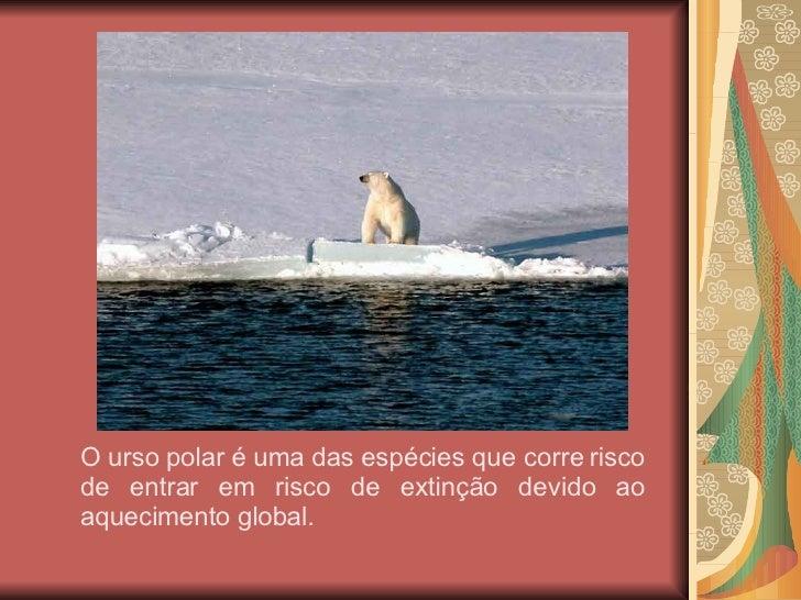 O urso polar é uma das espécies que corre risco de entrar em risco de extinção devido ao aquecimento global.