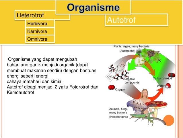 Pola Interaksi Dalam Ekosistem
