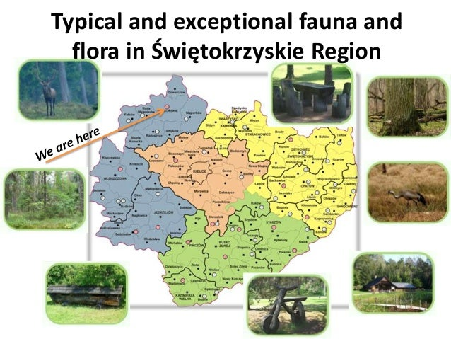 Typical and exceptional fauna and  flora in Świętokrzyskie Region