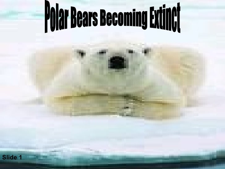 Polar Bears Becoming Extinct Slide 1