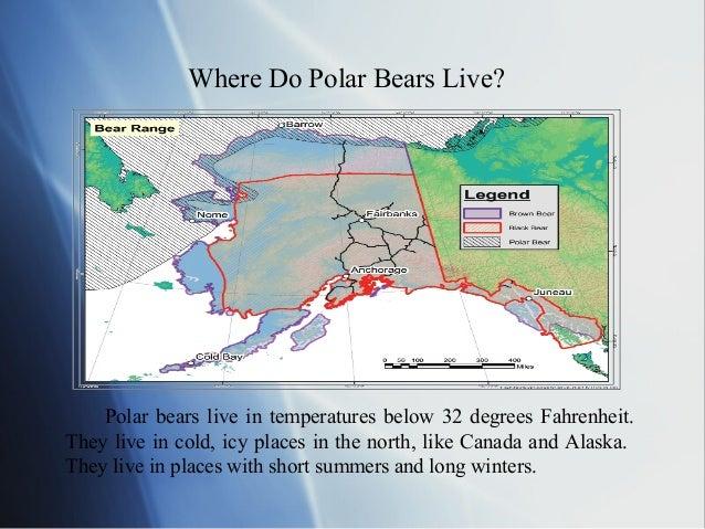 Polar Bear - Map of where polar bears live