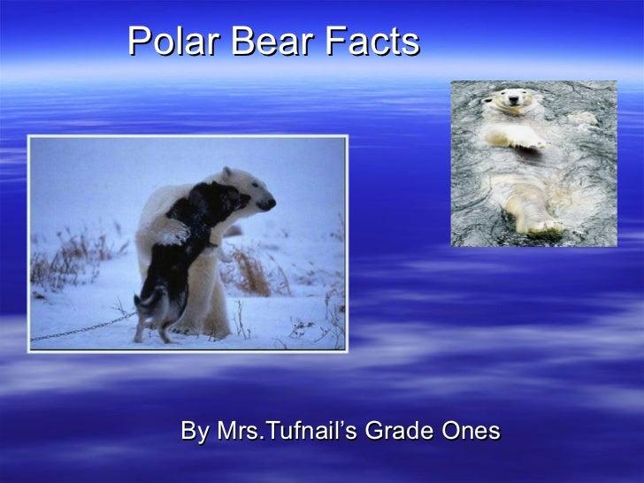 Polar Bear Facts  By Mrs.Tufnail's Grade Ones