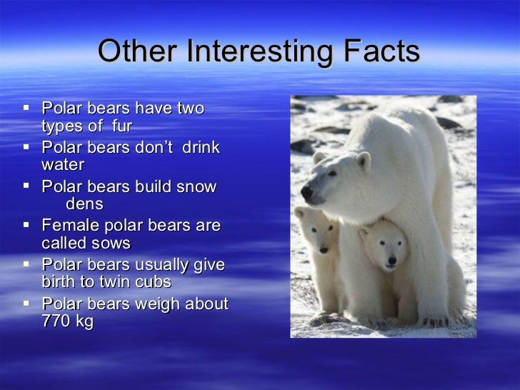 adaptations of arctic mammals This is the second in a five-part series about the polar bear's adaptations to the arctic environment part one this is an adaptation common to many species in cold habitats like other marine mammals, the milk of polar bears is extremely high in fat and protein compared to other bears or land mammals.