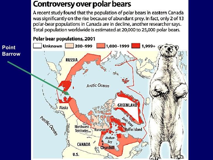 Polar bears in barrow ak 25 gumiabroncs Images