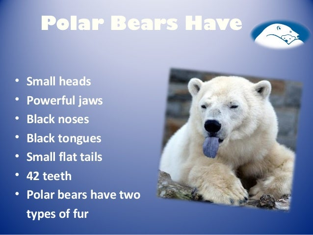 What do polar bears look like for kids