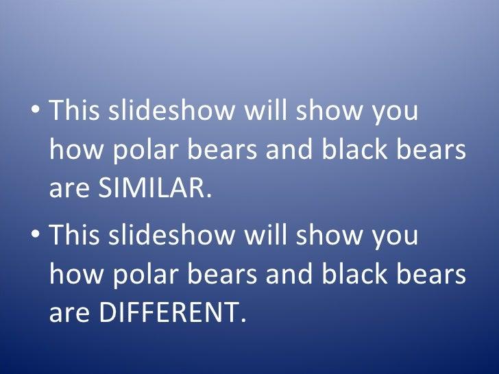 polar bears and black bears 3 728?cb=1294862717 polar bears and black bears