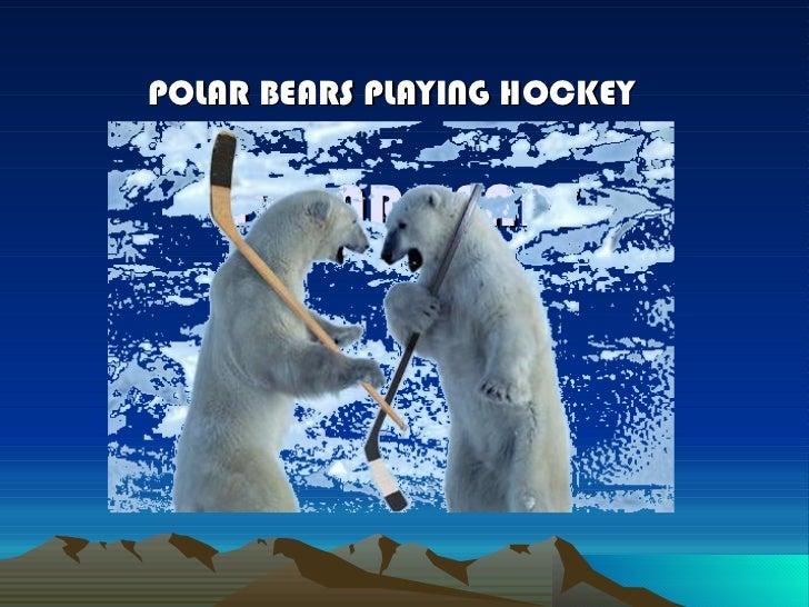 POLAR BEARS POLAR BEARS PLAYING HOCKEY