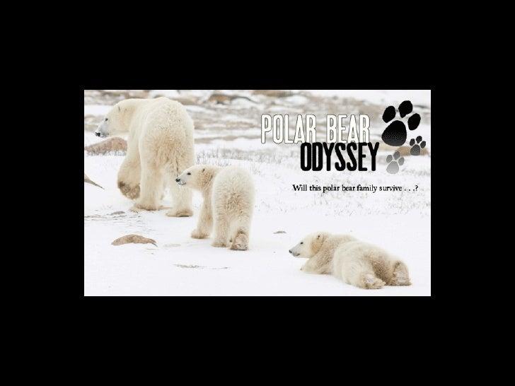 Polar Bear Week Slide 1