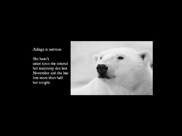 Polar Bear Week Slide 2