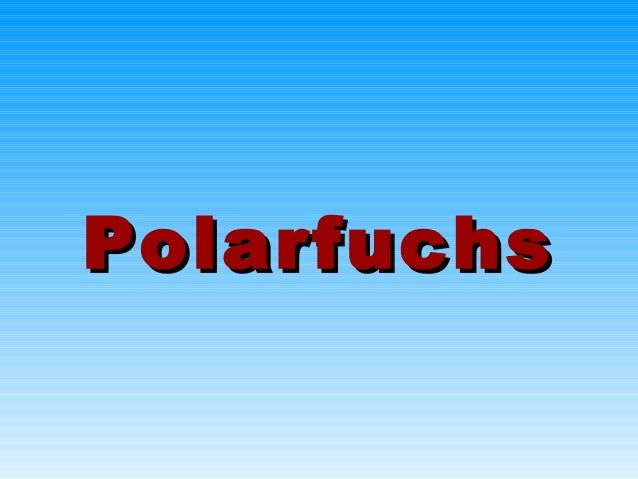 PolarfuchsPolarfuchs