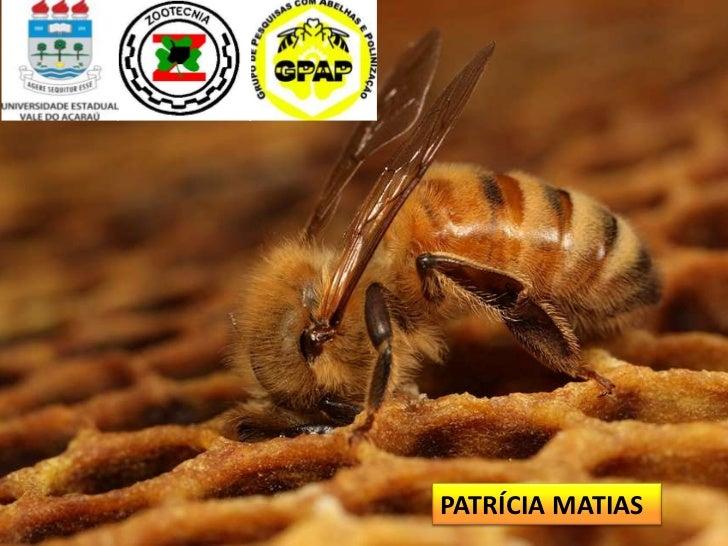 PATRÍCIA MATIAS
