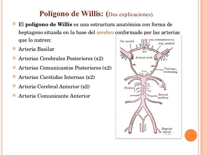 <ul><li>Polígono de Willis: ( Dos explicaciones). </li></ul><ul><li>El  polígono de Willis  es una estructura anatómica co...