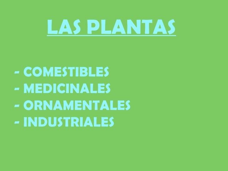 Polinizaci n for Clases de plantas ornamentales