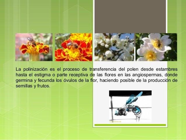 La polinización es el proceso de transferencia del polen desde estambres hasta el estigma o parte receptiva de las flores ...