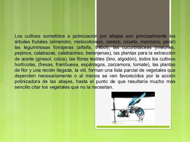 Los cultivos sometidos a polinización por abejas son principalmente los árboles frutales (almendro, melocotonero, cerezo, ...