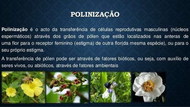 POLINIZAÇÃO  Polinização é o acto da transferência de células reprodutivas masculinas (núcleos  espermáticos) através dos ...