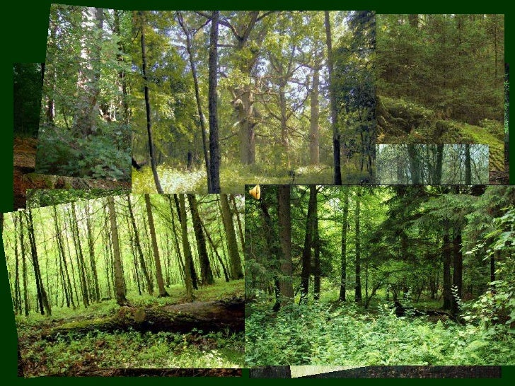 Polish forests<br />