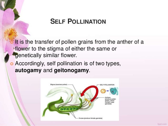 Mounting Pollen on Slides