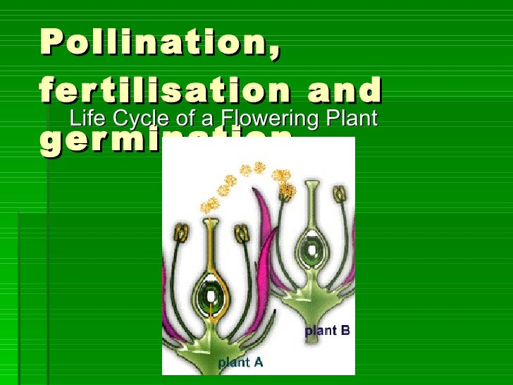 Pollination, fertilisation and germination  Life Cycle of a Flowering Plant