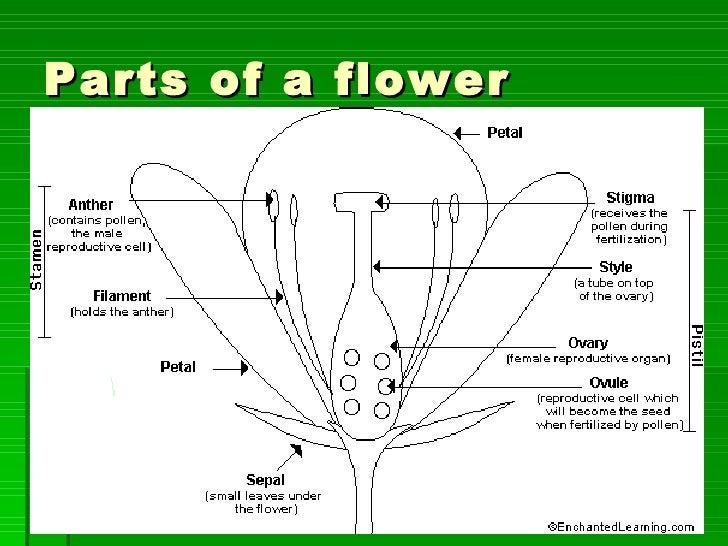 Pollination, fertilisation and germination