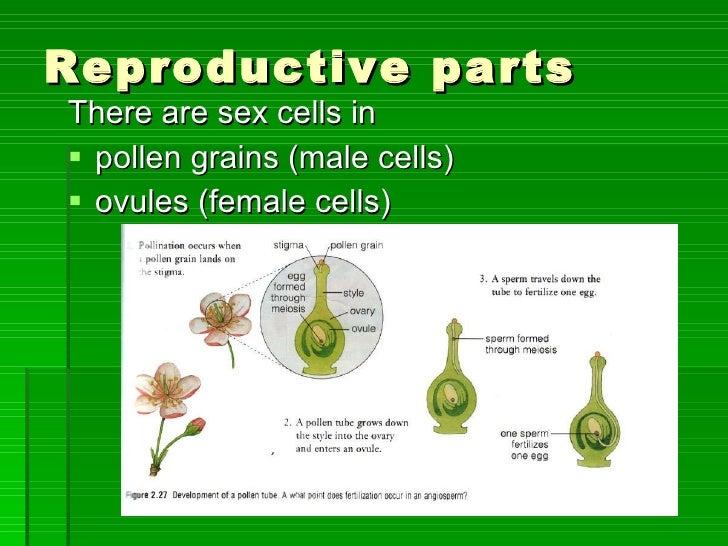 Pollination Fertilisation And Germination