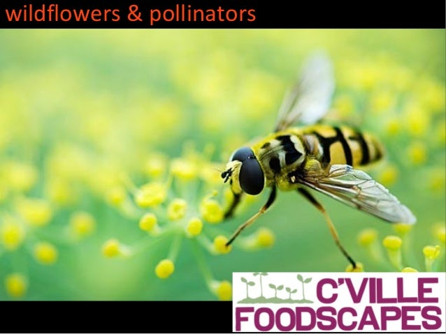 wildflowers & pollinators                            cville foodscapes