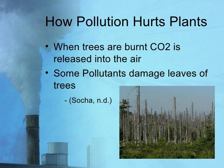 How Pollution Hurts Plants <ul><li>When trees are burnt CO2 is released into the air </li></ul><ul><li>Some Pollutants dam...